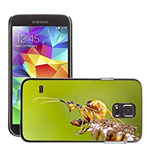 Etui Housse Coque de Protection Cover Rigide pour // M00129533 Mantis Bug Insecto India // Samsung Galaxy S5 S V SV i9600 (Not Fits S5 ACTIVE)