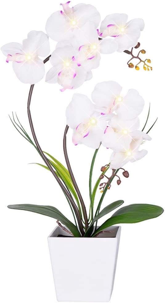 Cute LED Orchid Light