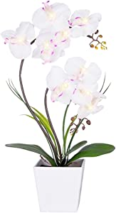 Homeseasons LED Lighted Artificial Orchid Arrangement-Battery Operated Orchid Pot with 9 Lights