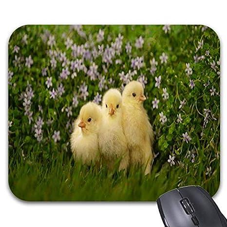Amazon Com Chicken Baby Cute Animal Mouse Pads Stylish