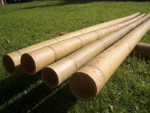10 Bambusstangen 8 10cm 2 95m Bambusrohr Bambusrohre Amazon De