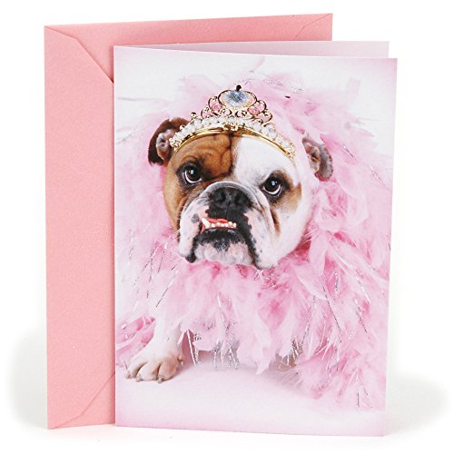 Bulldog Birthday (Hallmark Shoebox Funny Birthday Card (Bulldog in Tiara))