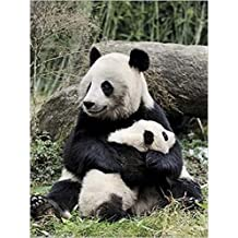 Posters: Pandas Poster Art Print - Giant Panda And Baby (16 x 12 inches)