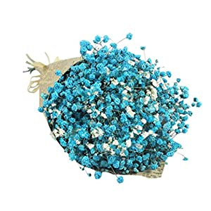 Vacally Natural Dried Flower Home Office Hotel Decor Natural Dried Flower Full Stars Gypsophila 20