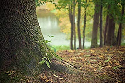 aca3a8006 Amazon.com: Photography Poster - Tree Trunk, Forest Floor, Trunk ...