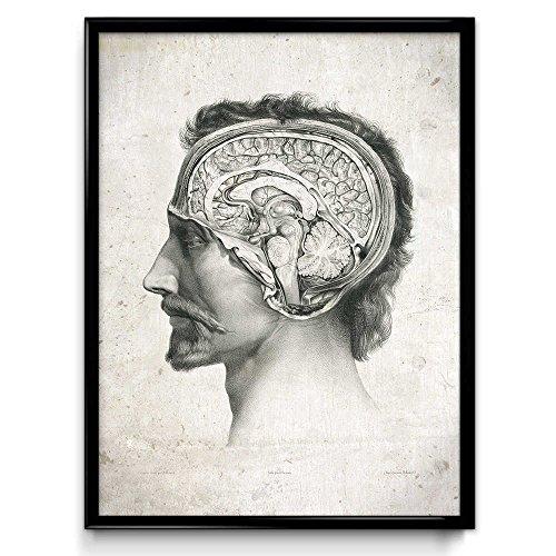 Orion Wall Decor - Anatomy Head and Brain Vintage Print - Anatomy Poster - Anatomy Art - Anatomy Picture - Wall Art - Office Decor - Office Art - Doctor Decor (Vintage Beige, 24W x 36T)