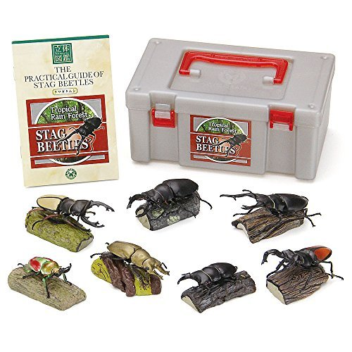Colorata Stag Beetles Real Figure Book