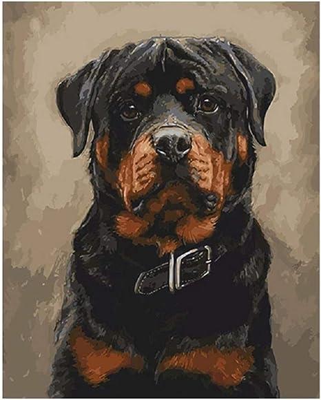 50CM ZUOQUAN Lienzo De Bricolaje Regalo De Pintura Al /Óleo para Adultos Ni/ños Pintura por N/úmero Kits Decoraciones para El Hogar-Perro Rottweiler 40
