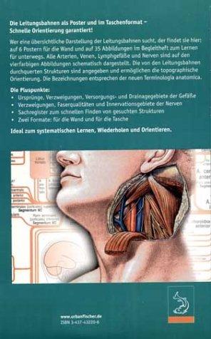 anatomiekompass taschenatlas der anatomischen leitungsbahnen