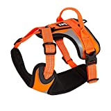 Hurtta Active Dazzle Dog Harness, Hi-Viz Orange, 24-32 in