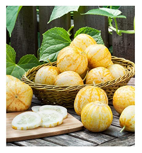 David's Garden Seeds Cucumber Pickling Lemon OR3329 (Yellow) 50 Non-GMO, Organic, Heirloom Seeds