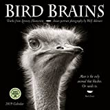 img - for Bird Brains 2019 Wall Calendar: Truths from Literary Humorists and Avian Portrait Photography book / textbook / text book