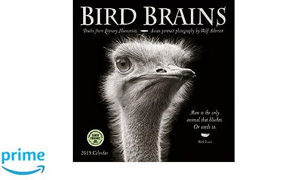 Emu Calendar.Bird Brains 2019 Wall Calendar Truths From Literary Humorists And