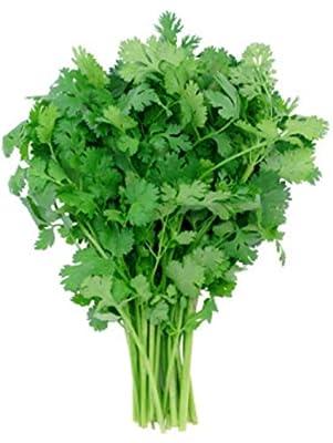 17.4g Leisure Cilantro Seeds ~Coriander Spice ~Culinary Garden Herb Spice USA