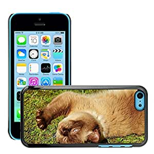 Hot Style Cell Phone PC Hard Case Cover // M00110299 Cat British Shorthair Play Mieze // Apple iPhone 5C