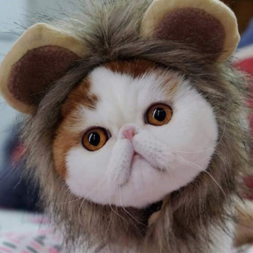 Chinchilla Halloween Costumes (Halloween pet headwear,Lion Mane Wig for Cat Dog Accessories,Adjustable Washable Comfortable Fancy Lion Hair kitty puppy Ears cute Beauty decoration for Christmas Party (M,)