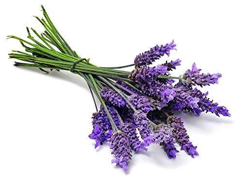 - Ellagance Purple Lavender 20 Seed- Blue Flower/Fragrant