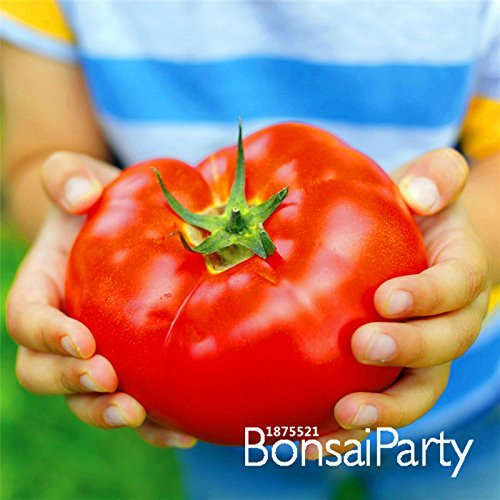 Promotion!Big Beef Hybrid Tomato Seeds, 100 Seeds / Bag, Extra-large, Extra-meaty, Extra-tasty Tomato,#SMMGK5 - Big Beef