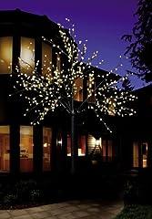 Bonetti mit 500 warm-weißen Lichtern