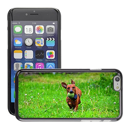 """Just Phone Cases Hard plastica indietro Case Custodie Cover pelle protettiva Per // M00128985 Teckel Chien boule brune Runs // Apple iPhone 6 PLUS 5.5"""""""