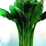 Beta Vulgaris Beets Green Chinese Vegetable Seeds, 5 packs, 50 seeds/pack, organic sea kale beet chard