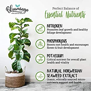 Bloomingo Indoor Plant Food - Vine Wine All Purpose Liquid Houseplant Fertilizer + Natural Norwegian Seaweed Extract for Healthy Plants and Soil - 8 oz