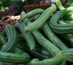 Pepino armenio 25 Semillas - Serpiente Melón de la