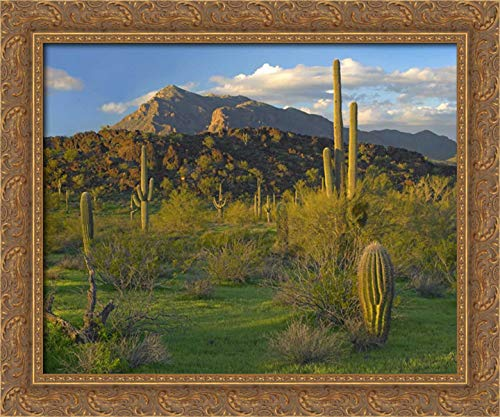 Saguaro Picacho Mountains, Picacho Peak State Park, Arizona 24x20 Gold Ornate Wood Framed Canvas Art by Fitzharris, Tim