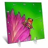 3dRose Danita Delimont - Frogs - South America, Panama. Strawberry poison dart frog on bromeliad. - 6x6 Desk Clock (dc_278317_1)