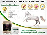 Gooseberry Body Flex Horse Joint Supplement Say Goodbye to Hock injections with This Product. Supports Connective Tissue and Joint Health in Horses 4LB