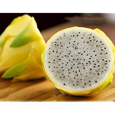 ADB Inc Rare Large Yellow Dragon Fruit Pitaya Organic Seeds : Garden & Outdoor