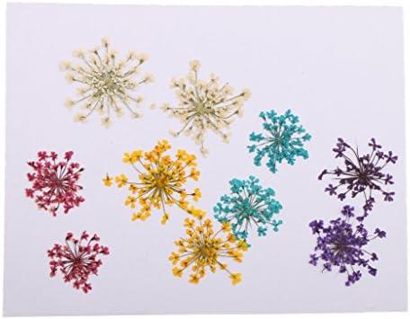10本入り 帽子/服装/カード飾り 手芸用品 結婚式 ギフト装飾 本物花 乾燥花