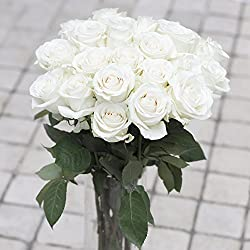 Greenchoice - 50 Fresh cut white roses | 20 '' long stem | No vase for Valentine's Day
