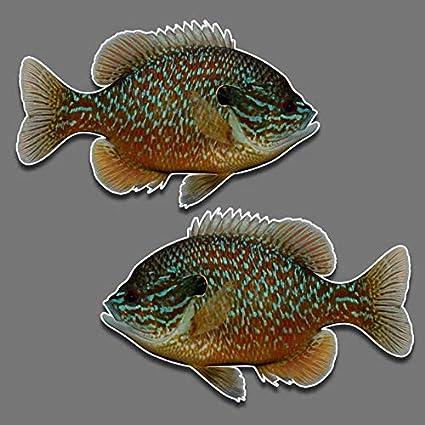 f21d55918a1 Bluegill fish panfish vinyl decal set of 2 R-L facing 5.5 quot  x 9 quot   freshwater
