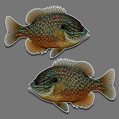 Fish Decal Set - Bluegill fish panfish vinyl decal set of 2 R-L facing 5.5