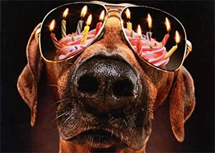 Image Unavailable Not Available For Color Dog Birthday Candles Sunglasses Avanti Funny Card