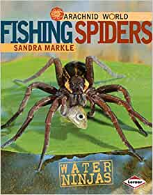 Large wandering spiders in Amazonian forests