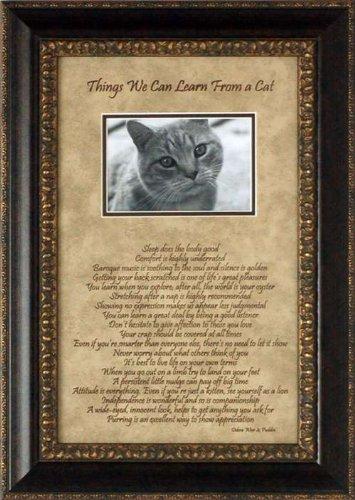 """Reflejos de la artística """"cosas que podemos aprender de un gato"""" Photomat"""