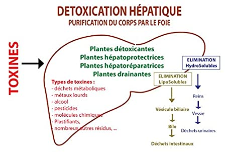 hépadrel líquido - détox del hígado - Romero + Diente + Cardo Marie + Curcuma - Frasco de 250 ml biodynamisé: Amazon.es: Salud y cuidado personal