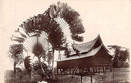 Kampon Malaysia Tropical Tree Hut Cabin Real Photo Antique Postcard - Hut The Real