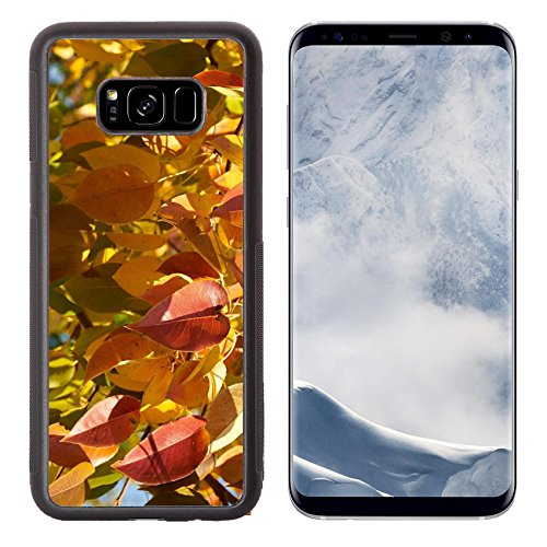 Luxlady Samsung Galaxy S8 Plus S8+ Aluminum Backplate Bumper Snap Case IMAGE ID: 34315902 Bright red and yellow leaves of pear tree (Bradford Outdoor Light)