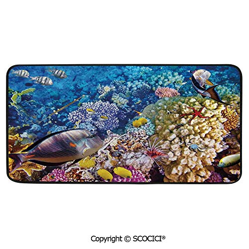 - Rectangular Area Rug Super Soft Living Room Bedroom Carpet Rectangle Mat, Black Edging, Washable,Fish,Egyptian Red Sea Bottom View with Marine Creatures Top of Tribal,39