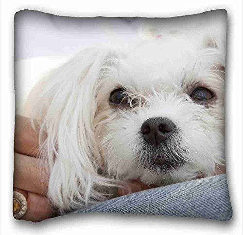 Custom Characteristic ( Animals Maltese Dogs Puppies lap ) Pillow Covers Bedding Accessories Size 16