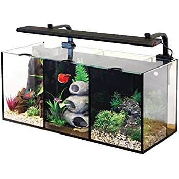 Deep blue professional adb11006 glass for Betta fish tanks amazon