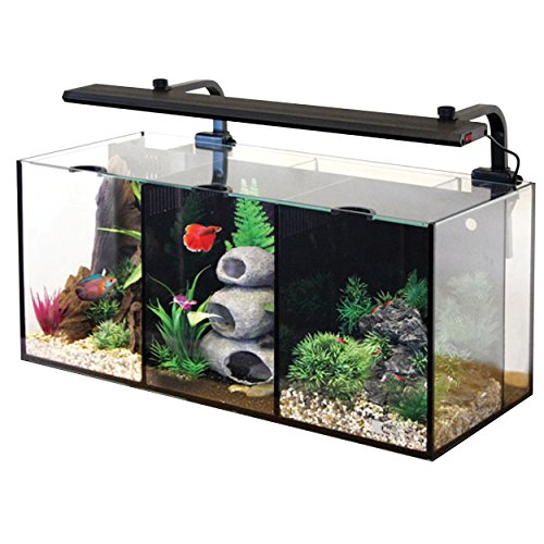 Aqua One 52093 Betta Trio Kit by Aqua One