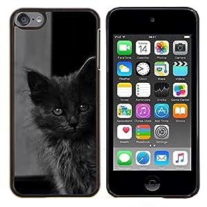 KLONGSHOP // Cubierta de piel con cierre a presión Shell trasero duro de goma Protección Caso - Lindo gatito bebé gato gris peludo Bestia - Apple iPod Touch 6 6th Touch6 //