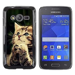 Stuss Case / Funda Carcasa protectora - Praying Cute Kitten Baby Paw Furry - Samsung Galaxy Ace 4 G313 SM-G313F