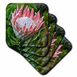 3D Rose South Africa-Cape Town King Protea Flower Close-up Soft Coasters, Multicolor