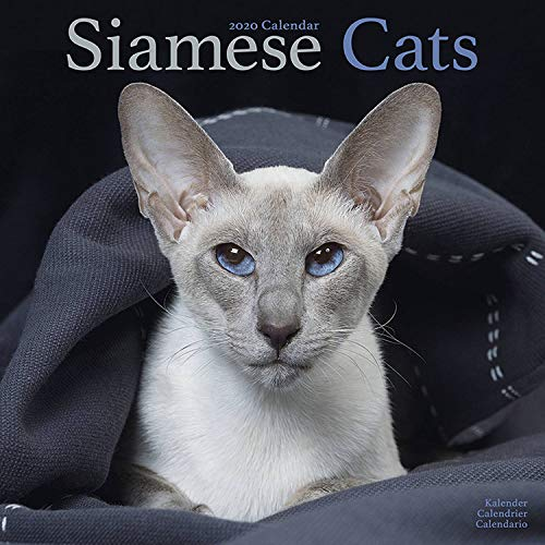 Siamese Cat Calendar - Calendars 2019 - 2020 Wall Calendars - Cat Calendar - Animal Calendar - Siamese Cats 16 Month Wall Calendar by Avonside (Multilingual Edition)