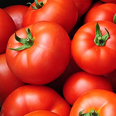 Tomato Garden Seeds - Early Girl Hybrid - Non-GMO, Vegetable Gardening Seed